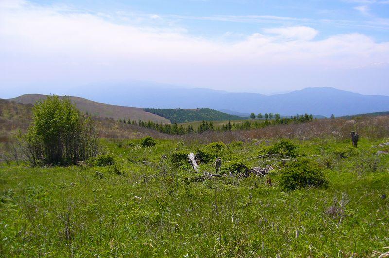 新緑霧ヶ峰�